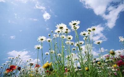 3515408_normal_flower_wallpapers (400x250, 24Kb)