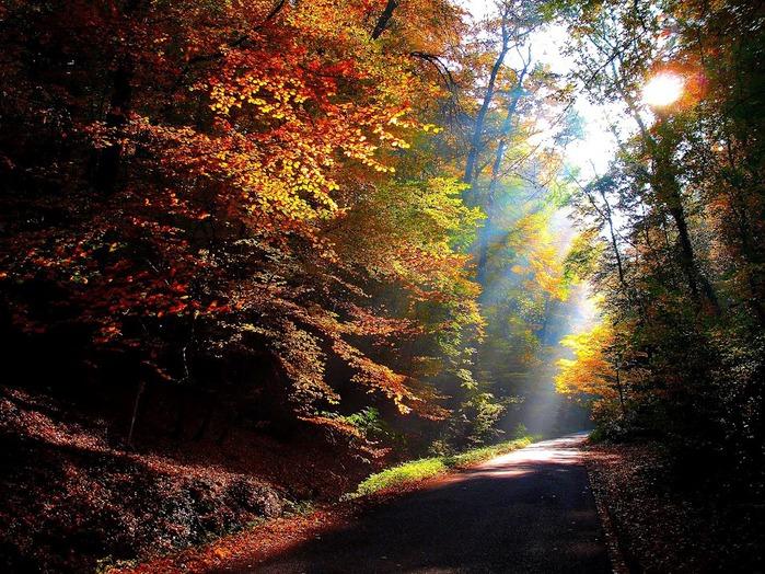 Закружила осень листопадами, заблистала хрупкой красотой... 79288