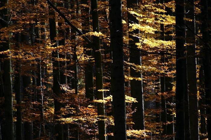 Закружила осень листопадами, заблистала хрупкой красотой... 54074