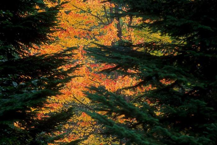 Закружила осень листопадами, заблистала хрупкой красотой... 30481