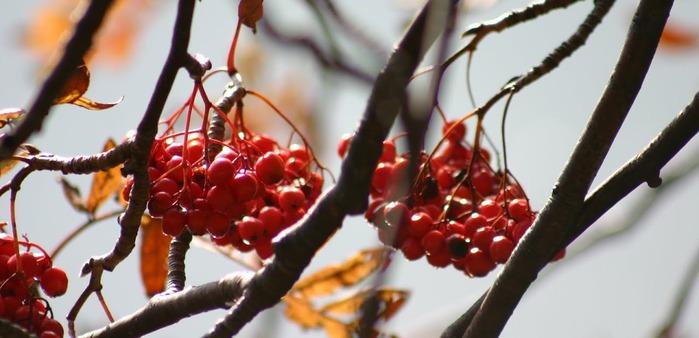 Закружила осень листопадами, заблистала хрупкой красотой... 96960