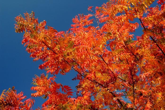Закружила осень листопадами, заблистала хрупкой красотой... 20618