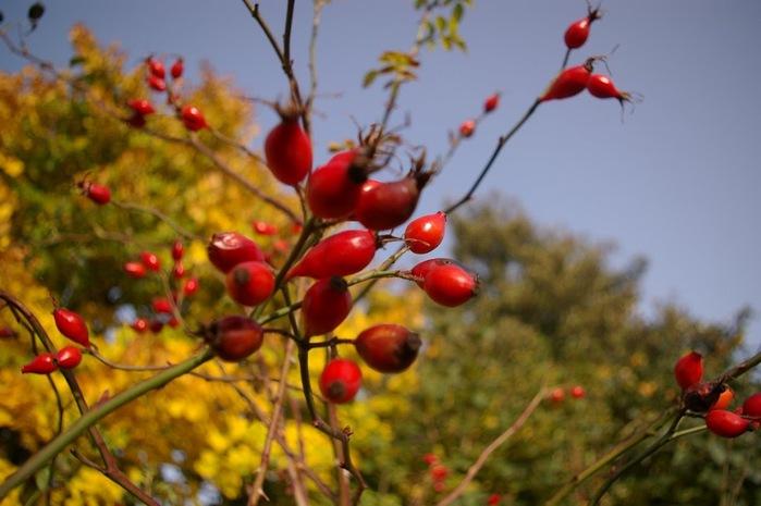 Закружила осень листопадами, заблистала хрупкой красотой... 99771