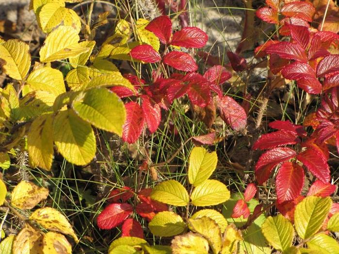 Закружила осень листопадами, заблистала хрупкой красотой... 27956