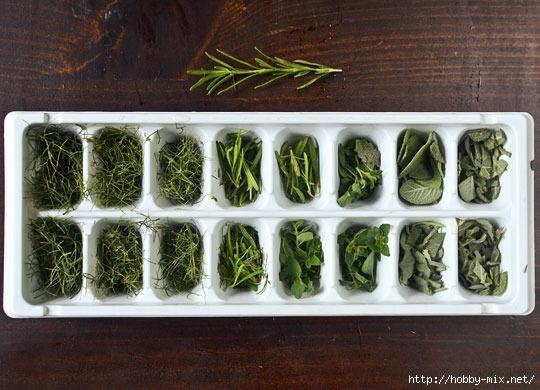 2012_07_02-Herbs02_rect540 (540x390, 156Kb)