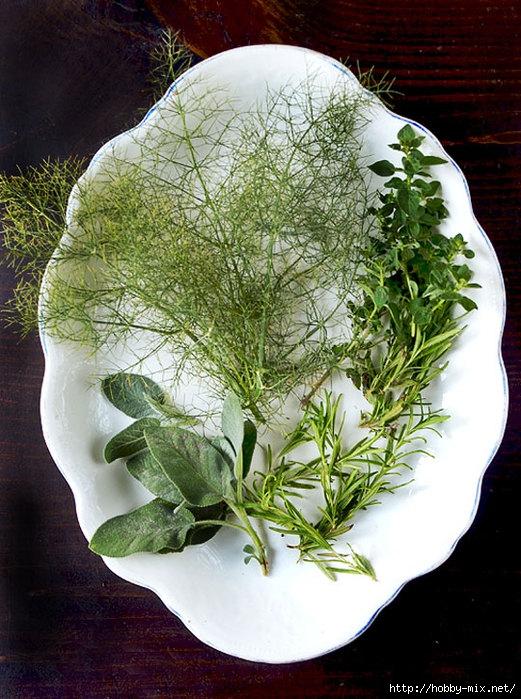 2012_07_02-Herbs (521x700, 306Kb)
