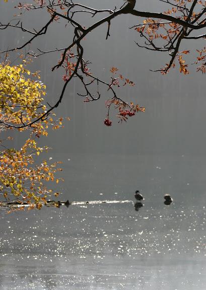 Закружила осень листопадами, заблистала хрупкой красотой... 94921