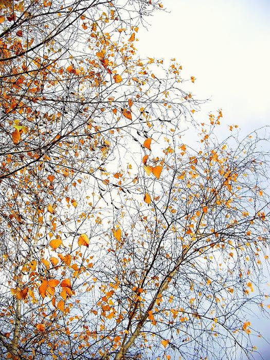 Закружила осень листопадами, заблистала хрупкой красотой... 52208