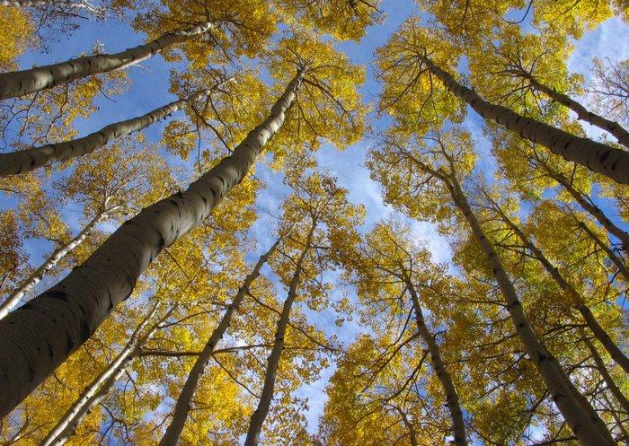 Закружила осень листопадами, заблистала хрупкой красотой... 94785