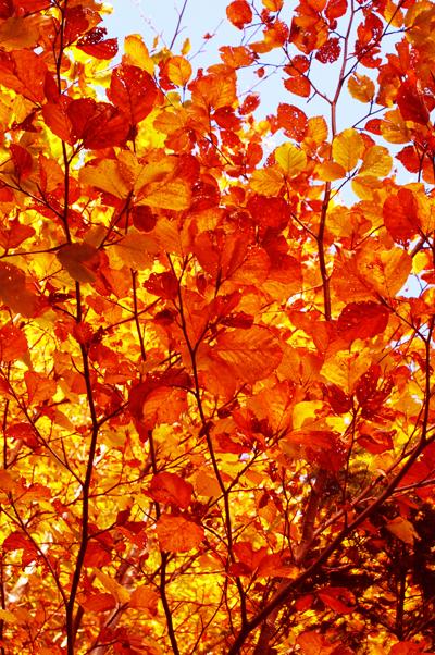 Закружила осень листопадами, заблистала хрупкой красотой... 13467