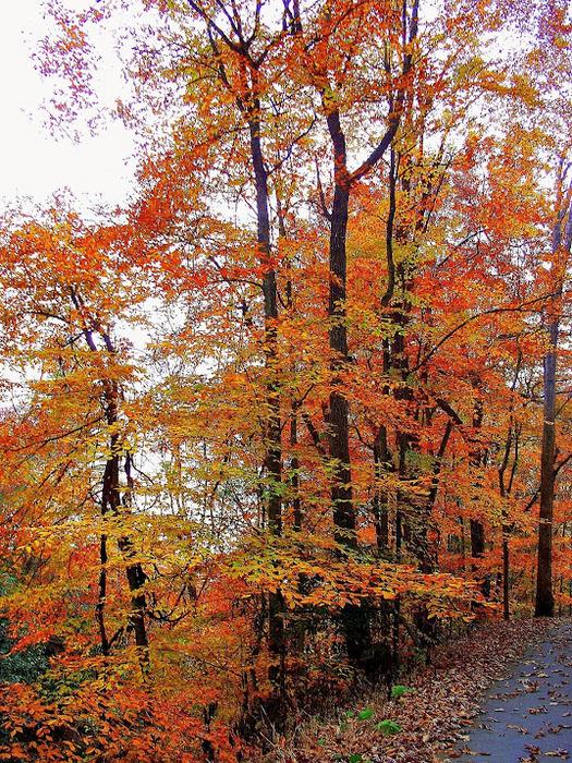 Закружила осень листопадами, заблистала хрупкой красотой... 44781