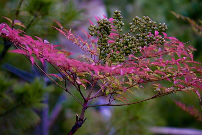 Закружила осень листопадами, заблистала хрупкой красотой... 73613