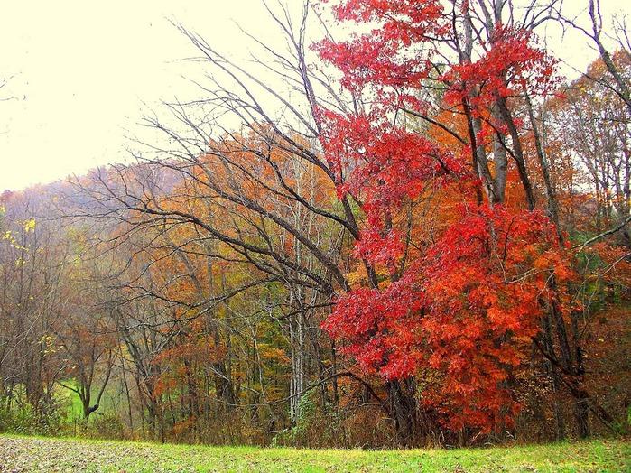 Закружила осень листопадами, заблистала хрупкой красотой... 80943
