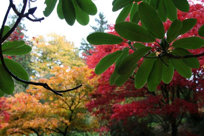 Закружила осень листопадами, заблистала хрупкой красотой... 77706