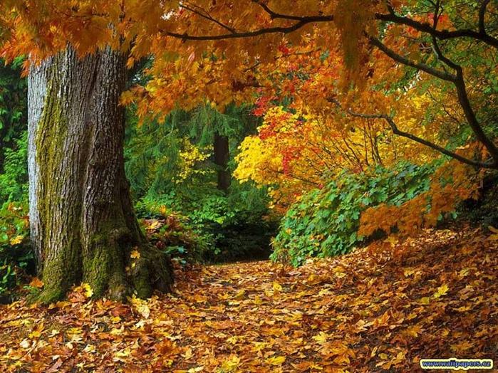 Закружила осень листопадами, заблистала хрупкой красотой... 10416