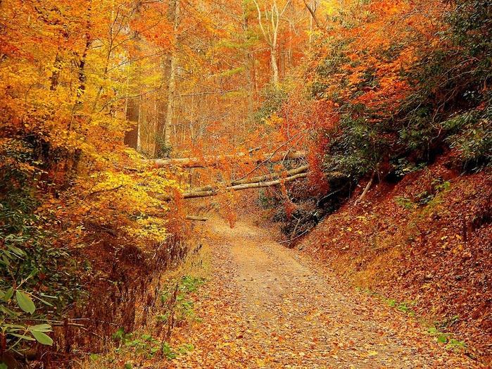 Закружила осень листопадами, заблистала хрупкой красотой... 60478