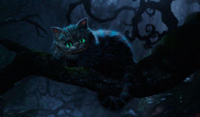cat_00 (700x410, 30Kb)