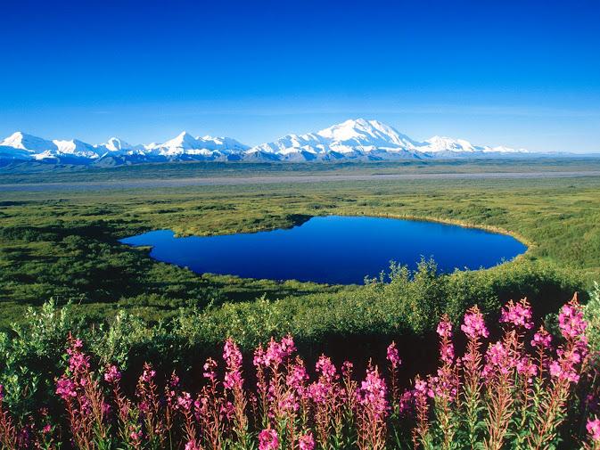 Tundra Pond, Mount McKinley, Denali National Park, Alaska (673x505, 174Kb)