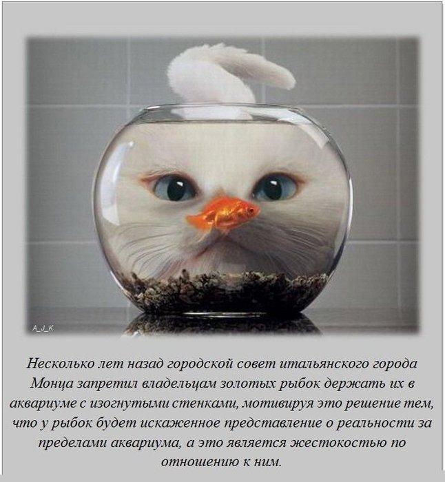 podborka_interesnykh_faktov_20_foto_15 (646x700, 73Kb)