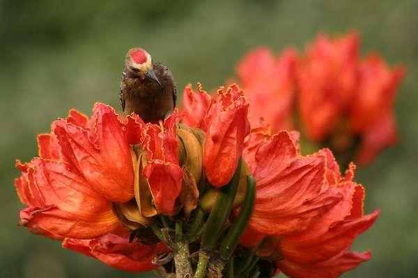 красивые цветы фото/1346828126_tyul_pannoederevofoto10 (600x400, 22Kb)