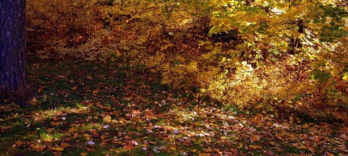 Закружила осень листопадами, заблистала хрупкой красотой... 91086