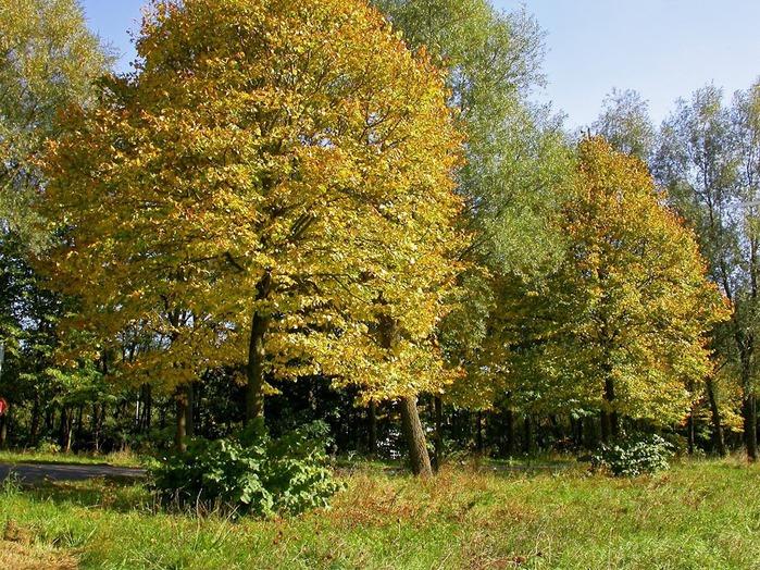 Закружила осень листопадами, заблистала хрупкой красотой... 87240