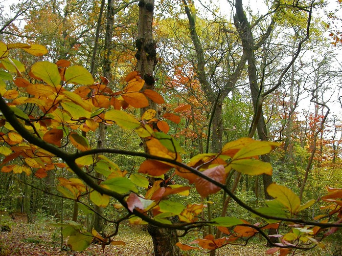 Закружила осень листопадами, заблистала хрупкой красотой... 85852