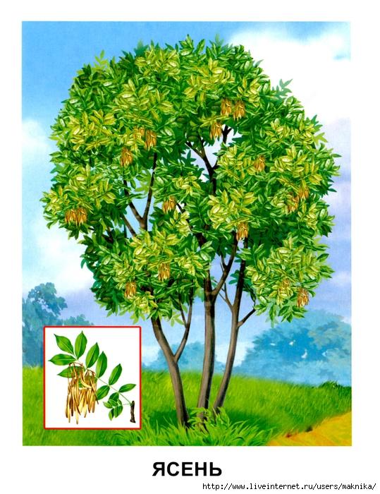 Деревья (01) (539x700, 350Kb)