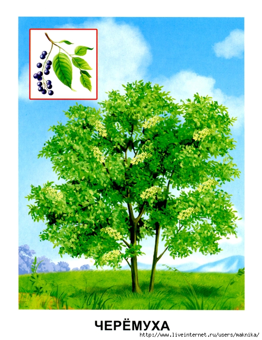 Деревья (03) (539x700, 340Kb)