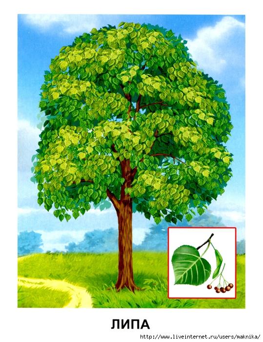 Деревья (06) (539x700, 346Kb)