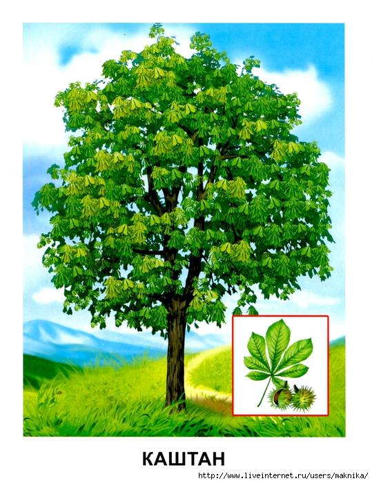 Деревья (09) (539x700, 352Kb)