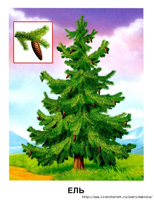 Деревья (13) (539x700, 324Kb)