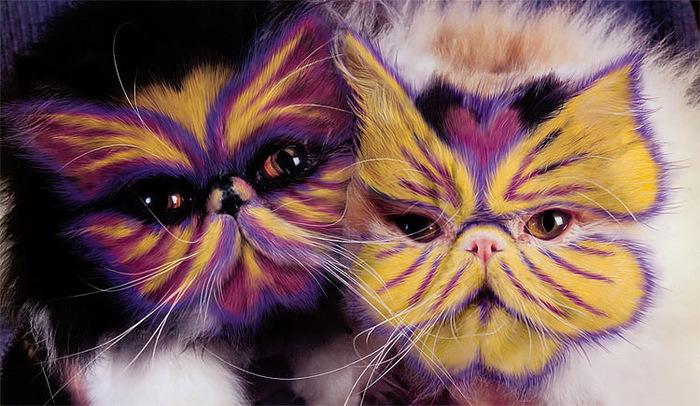 кошачий грумин фото (700x406, 144Kb)