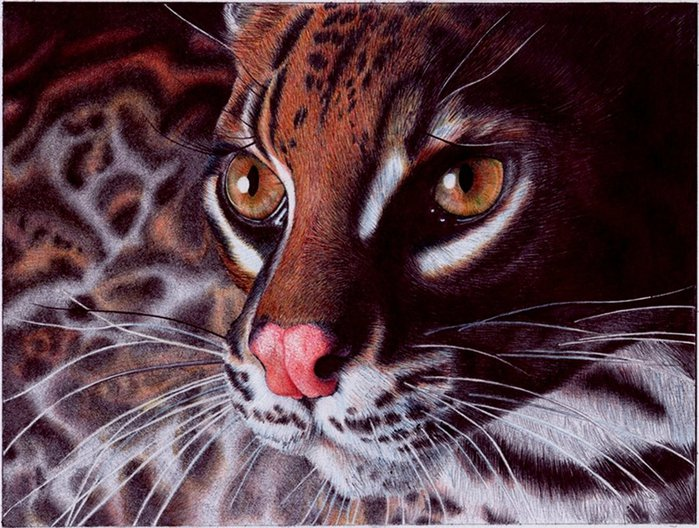 1346892093_margay_cat___bic_ballpoint_pen_by_vianaartsd4nafol (699x528, 111Kb)