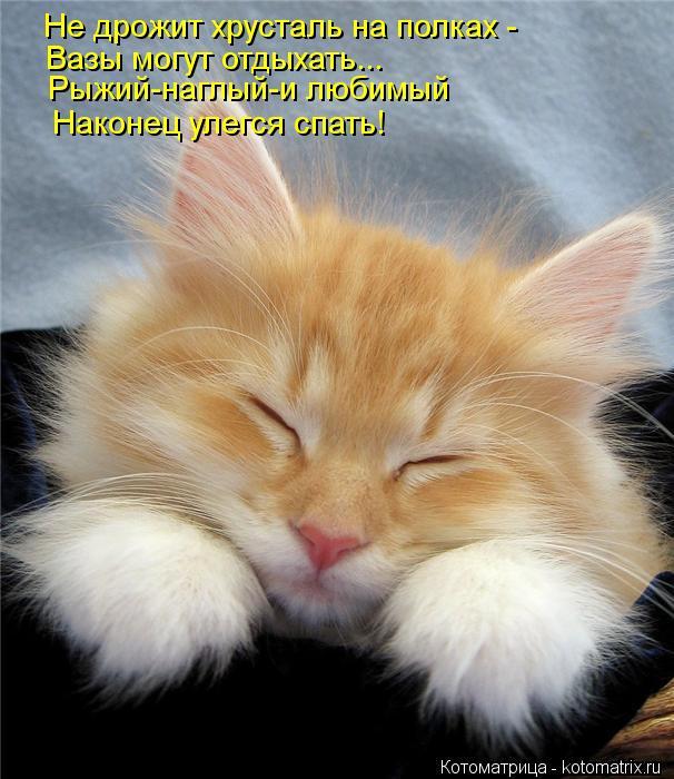 kotomatritsa_21 (606x700, 68Kb)