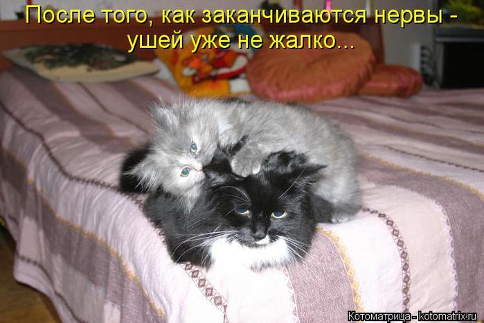 kotomatritsa_4O (700x466, 52Kb)
