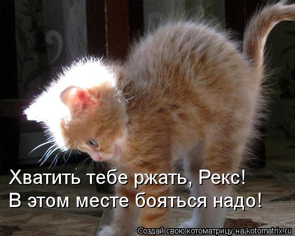 kotomatritsa_EI (600x480, 47Kb)