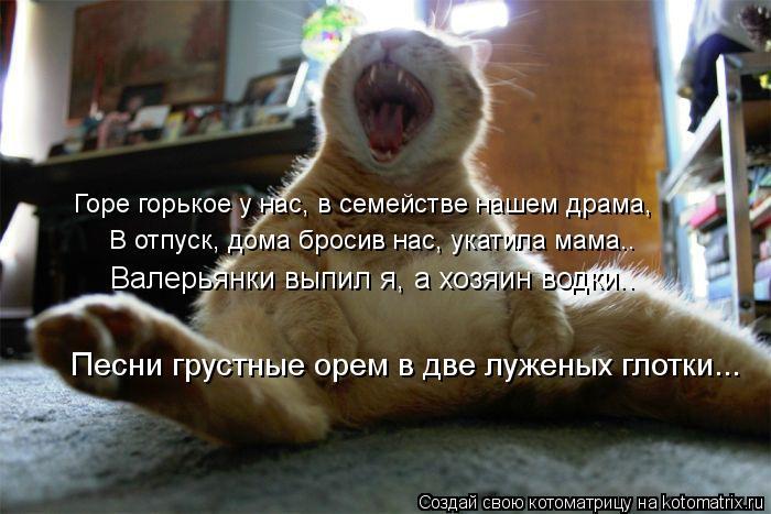 kotomatritsa_nk (700x467, 59Kb)