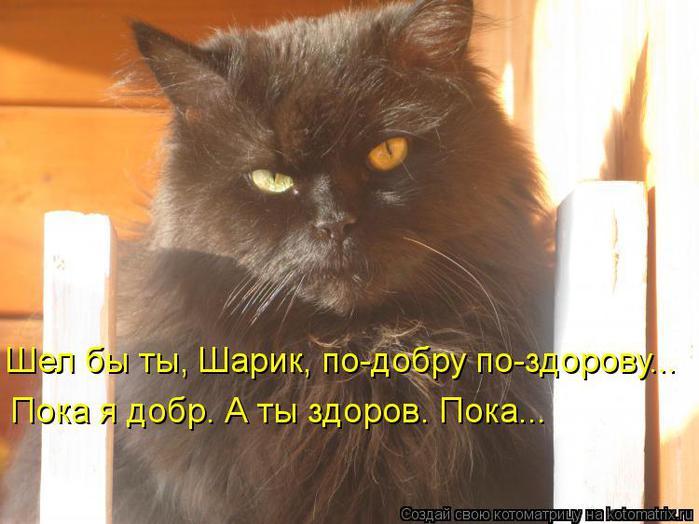 kotomatritsa_qt (700x524, 51Kb)