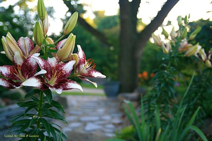 Лилейник - цветок одного дня 61 (700x466, 89Kb)