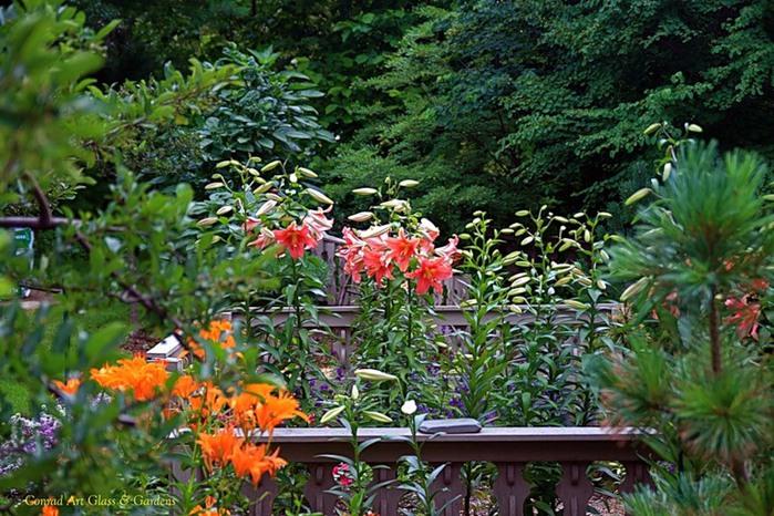 Лилейник - цветок одного дня 91 (700x466, 150Kb)