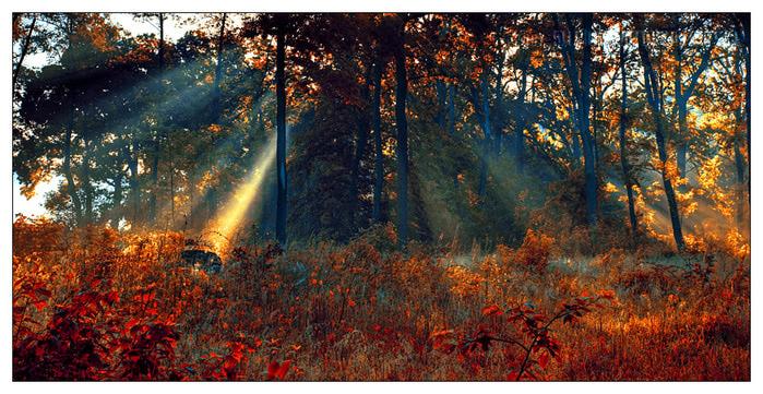 pica4u.ru_1204924663fire_garden_by_werol (700x361, 190Kb)