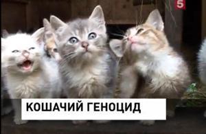 КОШАЧИЙ ГЕНОЦИД, (300x195, 11Kb)