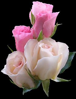 5 роз (250x325, 103Kb)