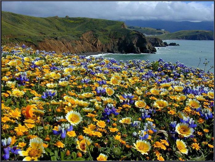 Фото цветов полей и лугов