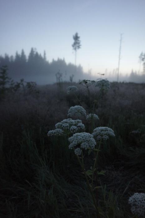 природа,туман,пасмурно (466x700, 66Kb)