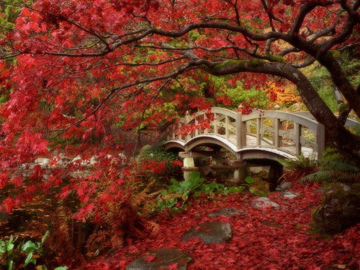 Japanese Garden, Royal Roads University, British Columbia (700x525, 198Kb)