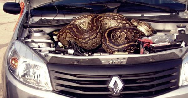 python2 (600x313, 40Kb)