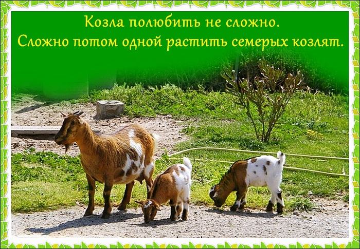 козы (700x485, 346Kb)