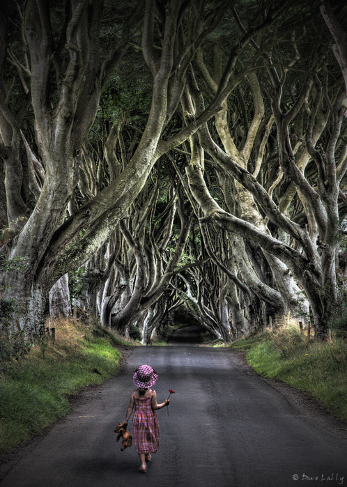 Dark-Hedges04 (498x700, 261Kb)